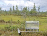 WEST SIBERIAN PEATLANDS ARE OF INTEREST TO SCIENTISTS ACROSS THE GLOBE